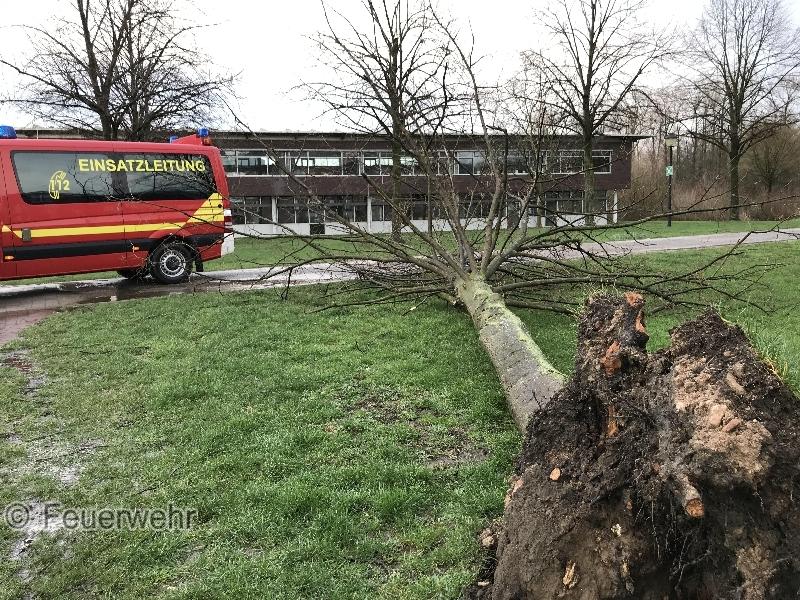 TH1 - Baum auf Straße